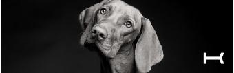 KRONO BELTS: FASHIONABLE DOG COLLARS